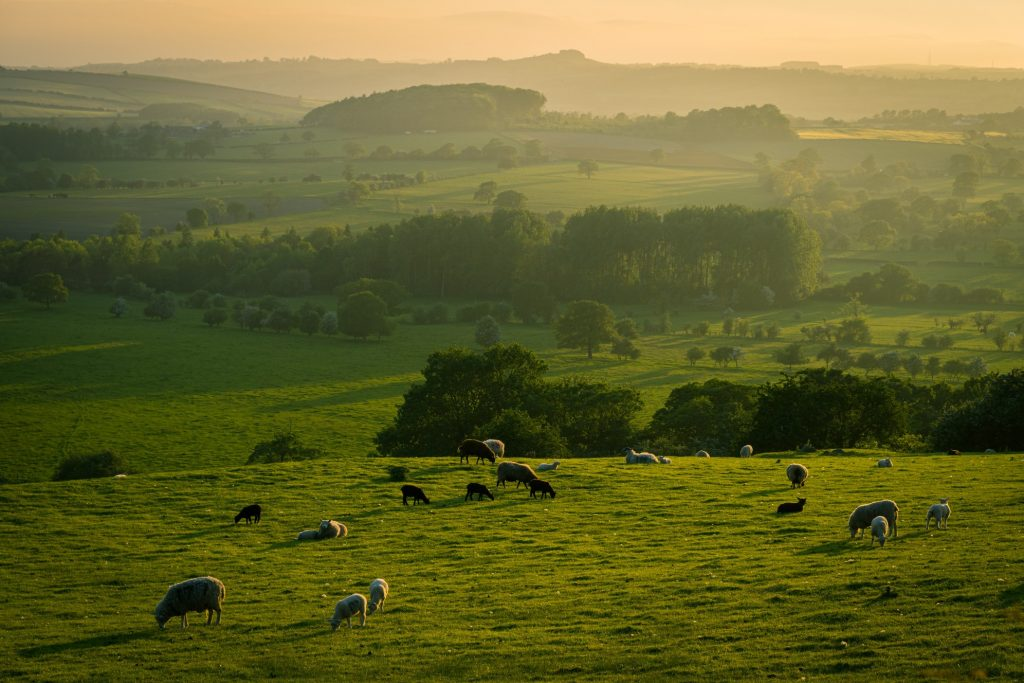Views of fields in Yorkshire