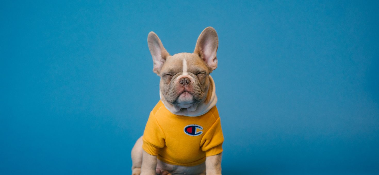Misleading Marketing: Why Cute Dogs Won't Sell Your Product