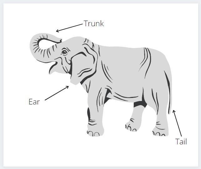 Diagram of an elephant created on Canva